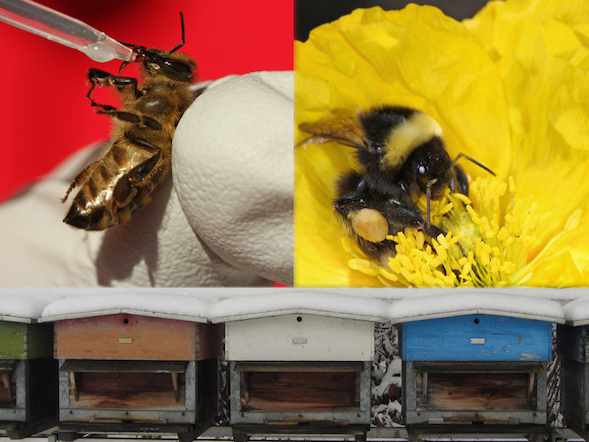 Titleimage: Institute of Bee Health