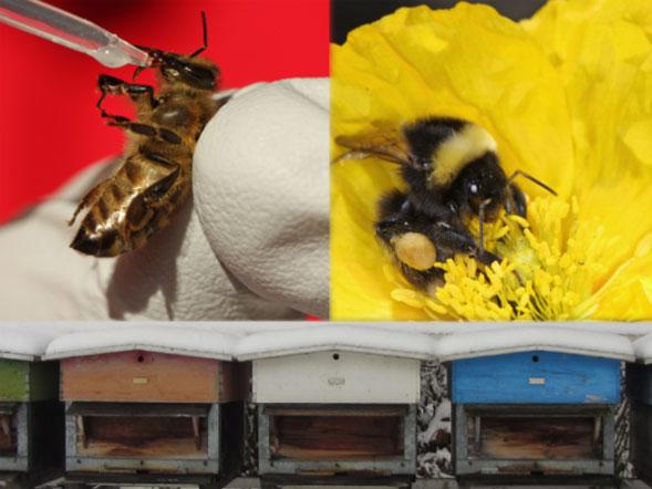 Titelbild: Institut für Bienengesundheit